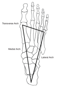 3-arches-of-foot